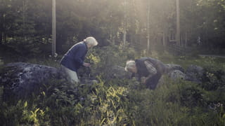 Photograph of an elderly couple standing in the midst of a forest. They appear to be picking greens from the ground. In the back there are trees and sunlight hits the spot where they are standing.