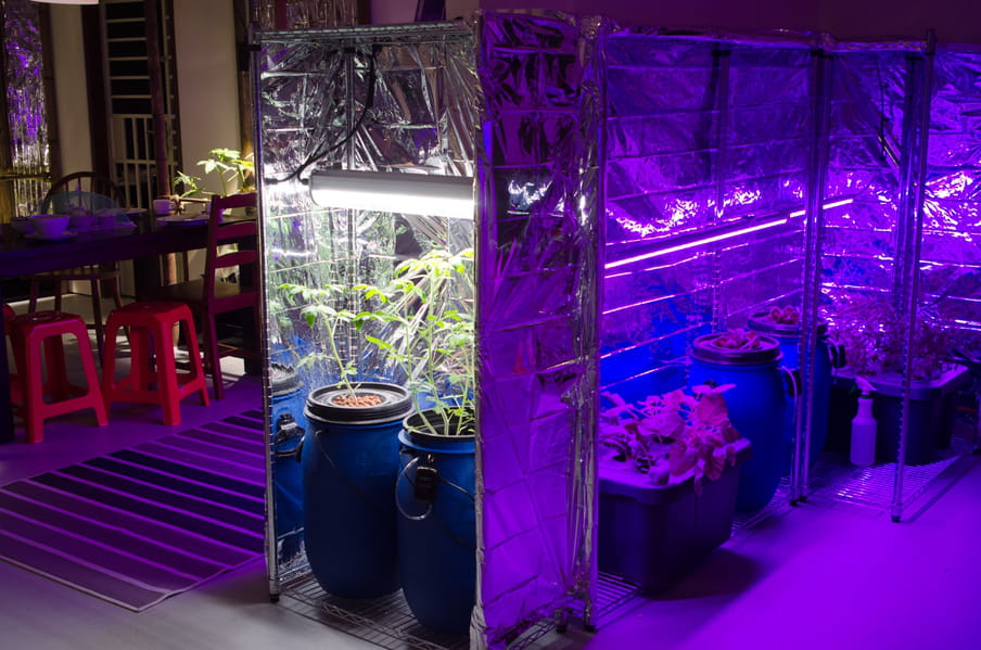 Photo of a room with vegetables grown under artificial light, and a dinner table next to it