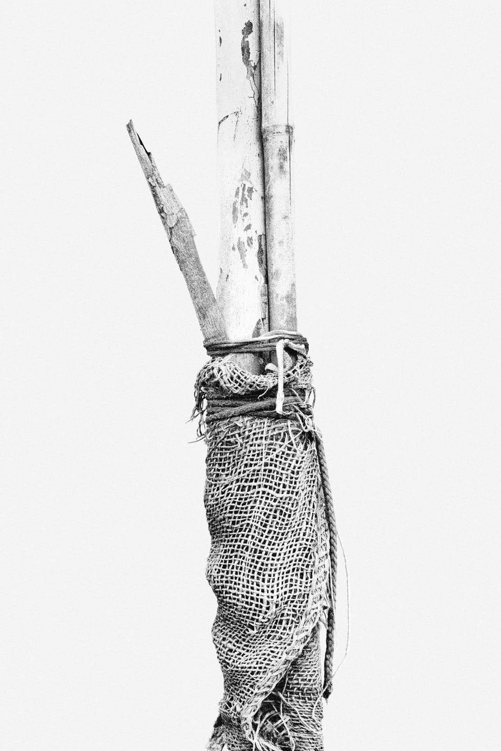 Black and white photo of a tree tied to a wooden branch, supporting it and protected by a large piece of rough fabric; against a white background.