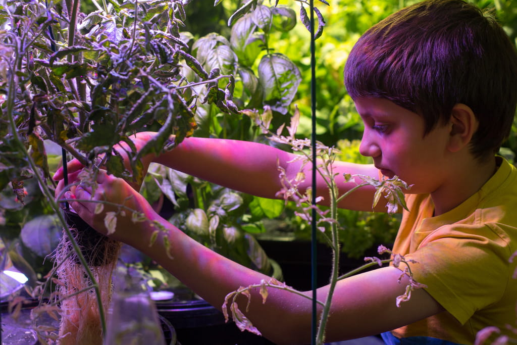 Photo of a child examining roots of plants