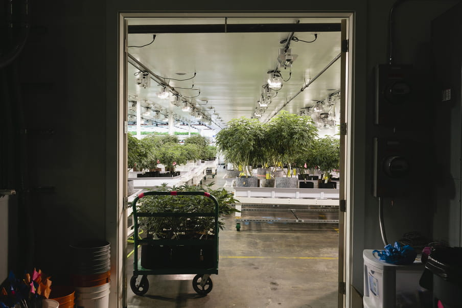 Photo of a doorway, on the side closest to the photographer it's quite dark - buckets are stacked there and some machines are hanging on the wall. At the other side of the doorway a big hall is shown with many cannabis plants, the ceiling filled with special lamps to enhance growth.
