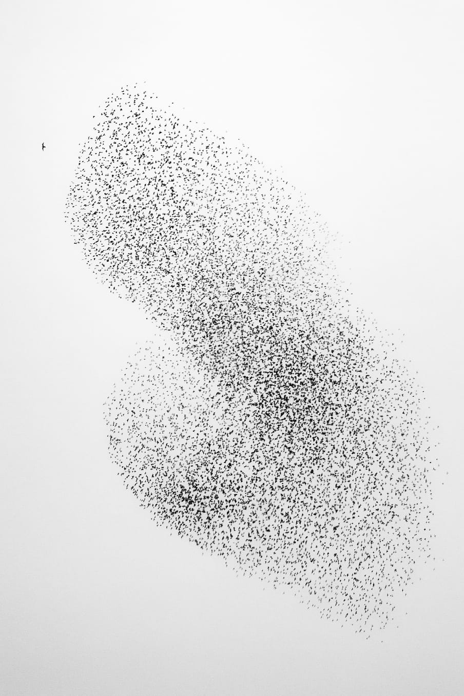 Photo of a flock of birds - against a white background