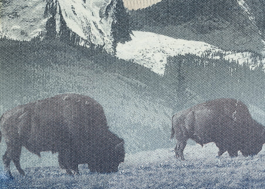 Except from passport - showing bizons eating grass in front of snow covered mountains