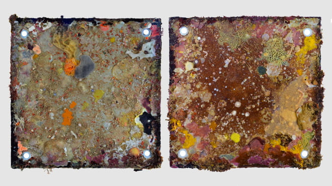Photograph of two coloured squares. the squares are panels taken out from the sea and the colours on those are due to the creatures living on the surfaces.