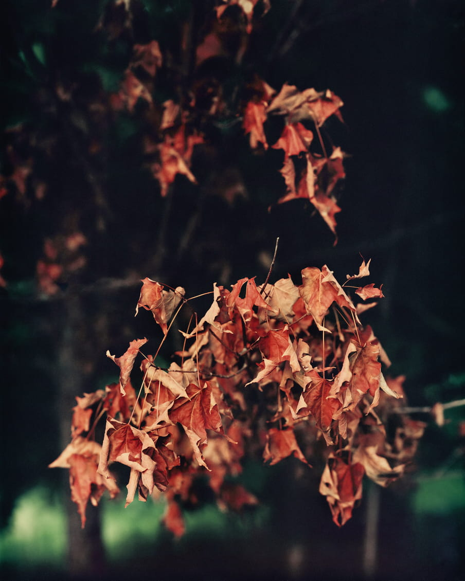 Photo of a branch with red leaves on it