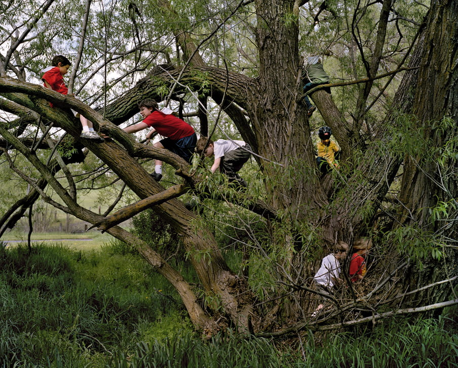Photo of kids climbing a tree