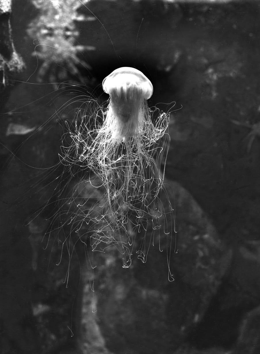 Black and white photo f a jellyfish